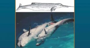 Download Reproductive Biology and Phylogeny of Cetacea: Whales, Porpoises and Dolphins PDF Free