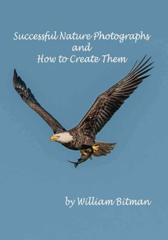 Download Successful Nature Photographs and How To Create Them PDF Free