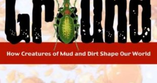 Download Under Ground: How Creatures of Mud and Dirt Shape Our World PDF Free